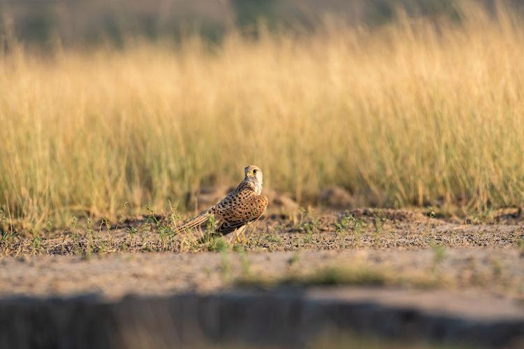Bird on a land