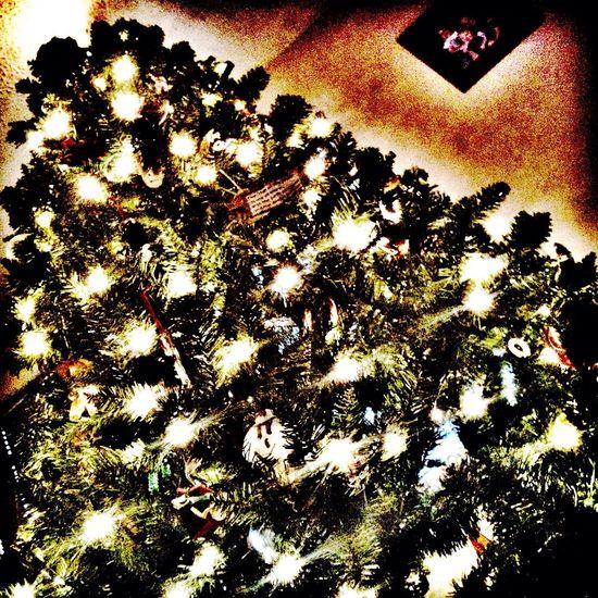Christmas Tree tis' the season.