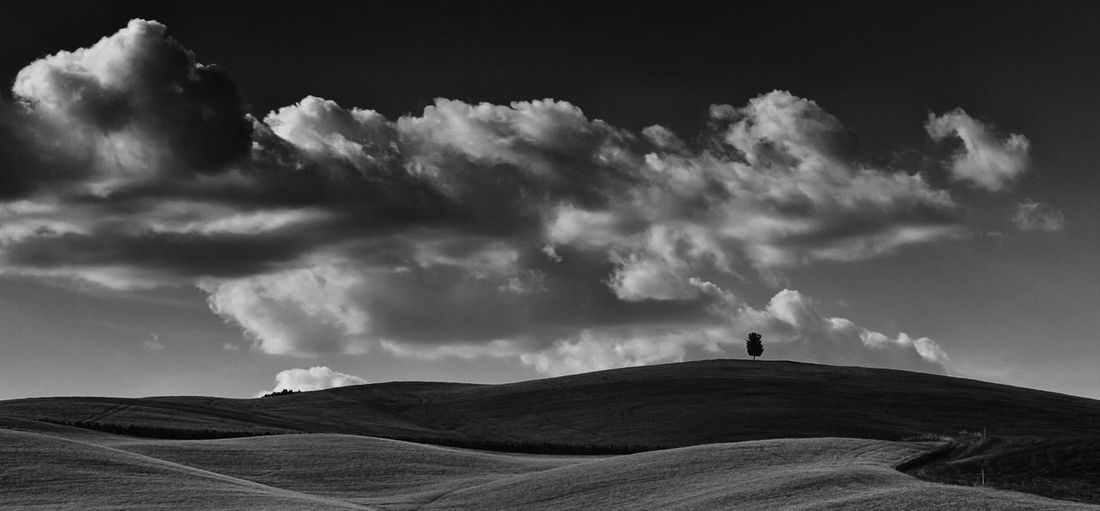 TREES VII. Cloud - Sky Sky Scenics - Nature Landscape Beauty In Nature Tranquility Horizon Over Land Land No People Bnw_collection Bnwphotography B&W Collection Tuscany Tree On A Hill Summertime After The Rain Panoramic Photography Bw Bnw_captures Black And White