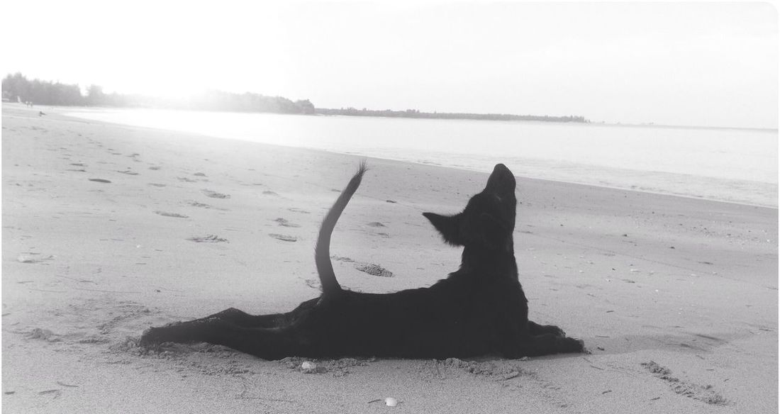 Dog Good Morning Hello World Black And White