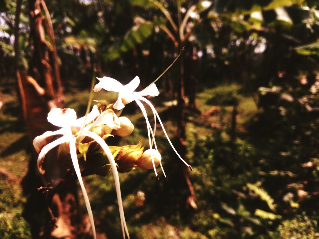 flower, growth, fragility, nature, petal, plant, beauty in nature, flower head, outdoors, freshness, close-up, no people, day, focus on foreground, blooming