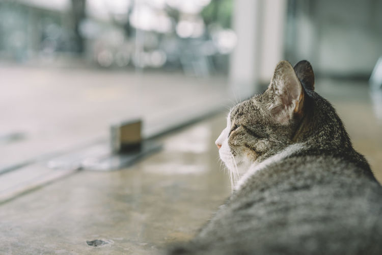 Animal Themes Close-up Day Domestic Animals Domestic Cat Feline Mammal No People One Animal Outdoors Pets Relaxation