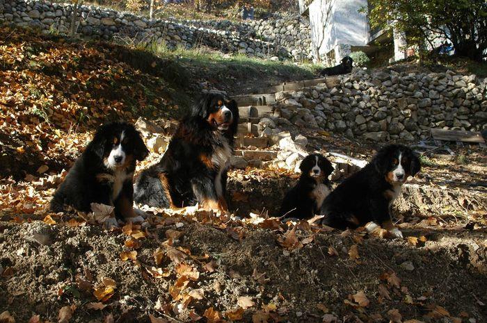 Family Dogs Bouvier Bernois SudDeFrance Alpesdehauteprovence Entrevaux Nikon Family