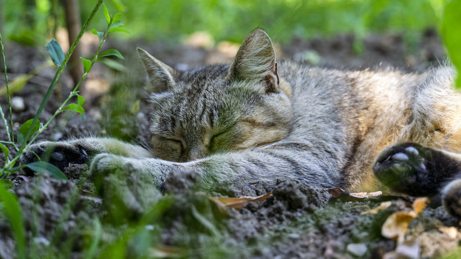 Close-up of a cat resting on field