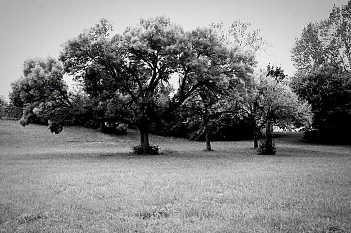 Tree Nature No People Beauty In Nature Green Color Grass Field Meadow Tranquility Outdoors Tranquil Scene Landscape Rural Scene Day Branch Sky Simple Life Nature Blackandwhite EyeEmNewHere