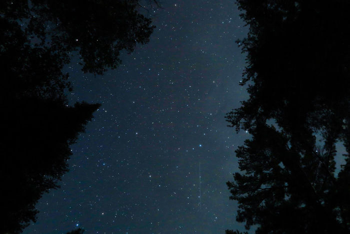 Algonquin Park Algonquinpark Algonquinprovincialpark Astronomy Beauty In Nature Constellation Galaxy Growth Low Angle View Milky Way Nature Night No People Outdoors Scenics Silhouette Sky Space Space Exploration Star - Space Starry Tree