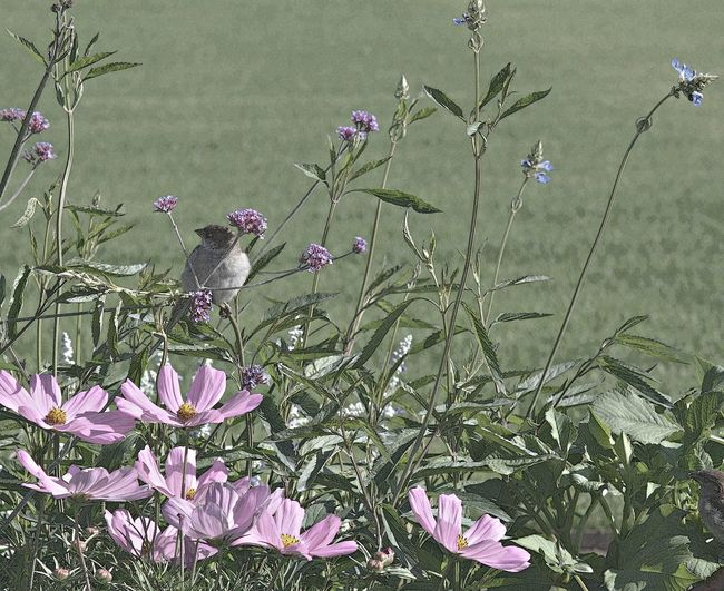 Beauty In Nature Bird Blooming Botany Flower Freshness Nature No People Paris Park