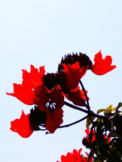 THE RED FLOWERS Red Flower Nature Fragility No People Growth Leaf Beauty In Nature Sky Day Low Angle View