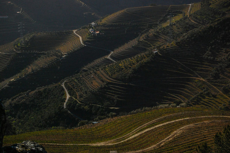 Birth Place of the Port Wine Landscapes With WhiteWall Port Wine Douro  Douro Valley Douro Wine DouroVinhateiro Hello World Helloworld