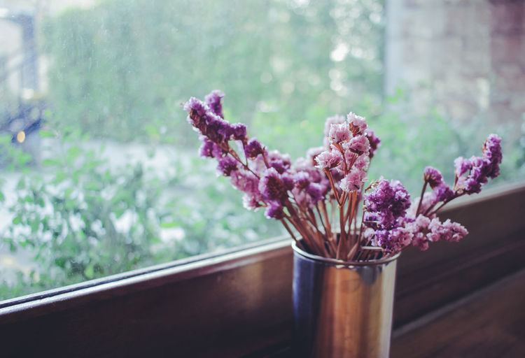 Close-up of pink flowers in vase by window