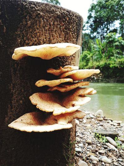 #amazonia #loveamazonia Tree Water Close-up Mushroom