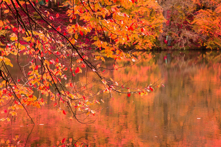 Autumn Background Birch Black Blue Brown Calm Color Colorful Fall Fir Foliage Forest Golden Green Lake Landscape Leaf Maple Morning Multicolored Natural Nature Orange Outdoor Paint Park Pastel Pond Puddle Rainy Red Reflecting Reflection River Riverbed Scenery Season  Seasonal Soft Structure Tranquil Tree Water Watercolor Wood Yedigoller Yellow