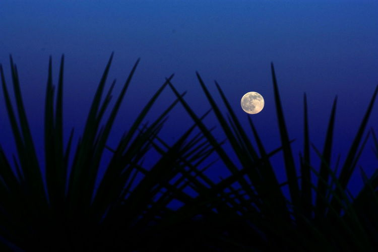 Desert moonrise Davis Mountains Texas Landscape Texas Sky Yucca Astronomy Beauty In Nature Crescent Desert Beauty Full Moon Half Moon Low Angle View Moon Nature Night No People Outdoors Sky Space