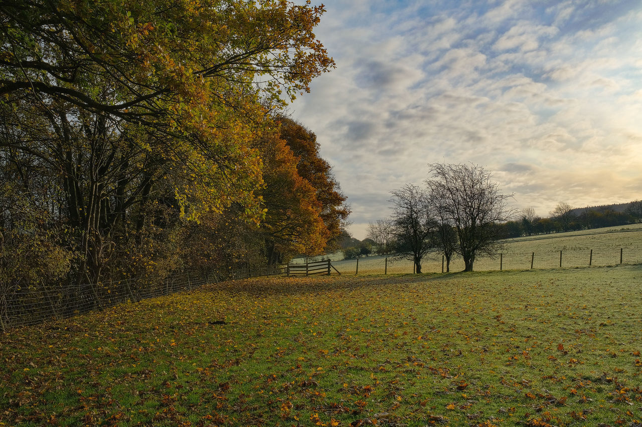 plant, tree, autumn, change, sky, tranquility, nature, tranquil scene, beauty in nature, land, field, scenics - nature, growth, cloud - sky, no people, landscape, environment, grass, day, non-urban scene, outdoors, fall