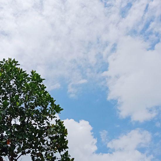 Tree Blue Branch Sky Cloud - Sky
