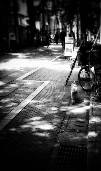 Lightandshadow Light And Shadow EyeEm Best Shots Cat Monochrome Full Frame Blackandwhite 路地裏 Japanesephotography Shiny Tokyo Japanese  Snap Japanese Culture Temple Street City Street
