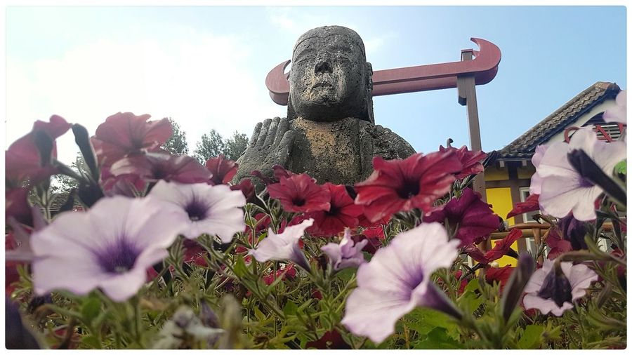 Buddah statue Scarbrough Taking Photos Statue Buddah Scarbrough Park Flowers Focus