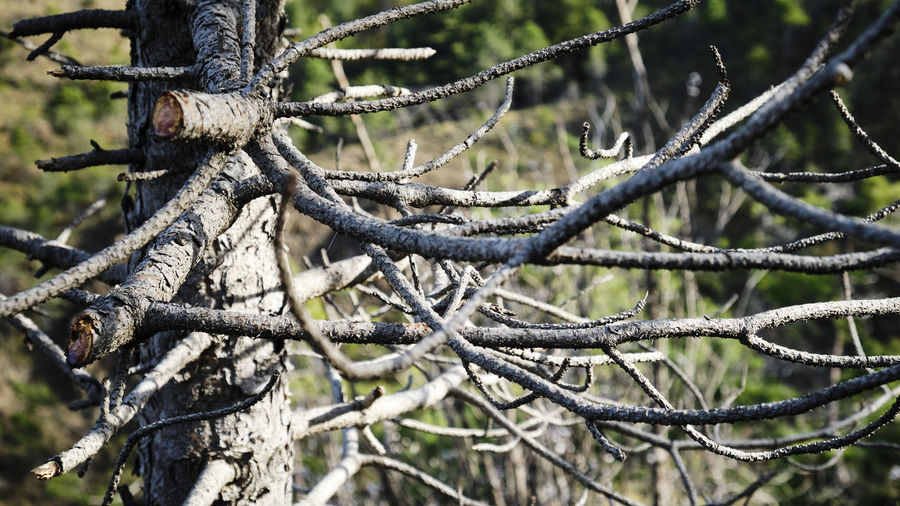 Close-up of a rope on tree