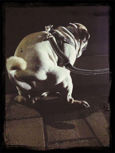 Pug Love Pug Time Pug Sitter Pug Life  メス求む☆彡