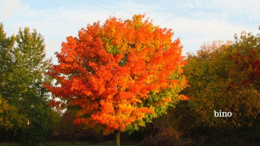 Taking Photos Autumn colors Single Tree So Pretty!  Around The Lake Sunny Day Cadillac Michigan