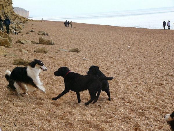 Dogs Dog Walking Watchin' The Dogs Playing With The Animals Playing Dogs Dogs Running  Dogs Rule Borzoi