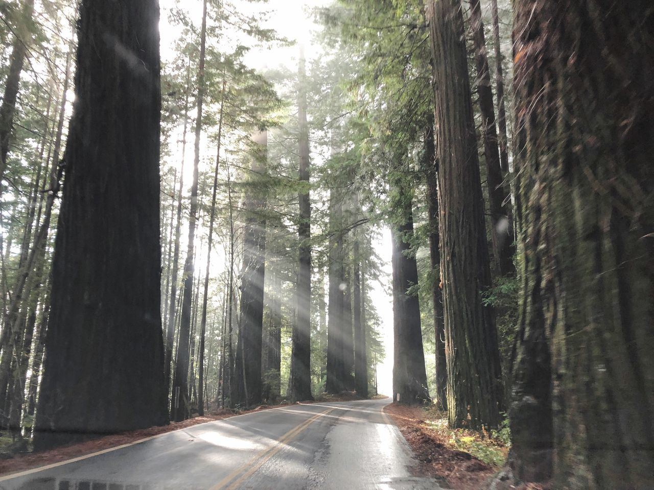 tree, forest, tree trunk, nature, day, no people, the way forward, road, tranquil scene, tranquility, beauty in nature, scenics, outdoors, landscape
