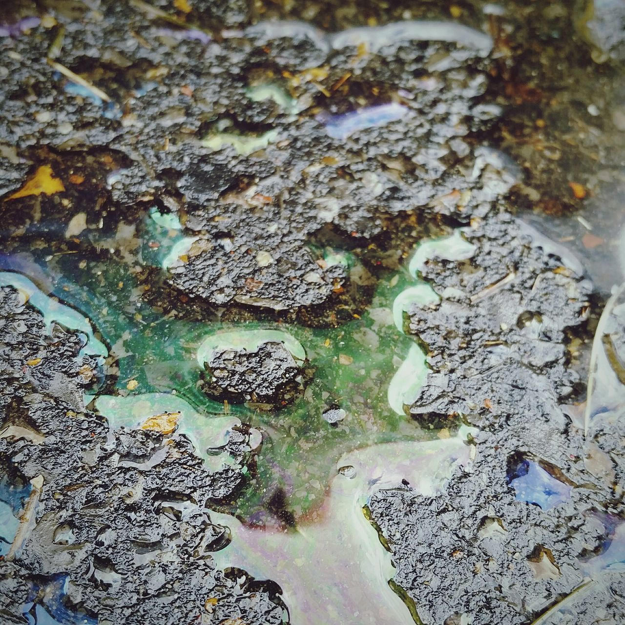 textured, backgrounds, full frame, close-up, no people, day, lichen, nature, oil spill, tree, outdoors
