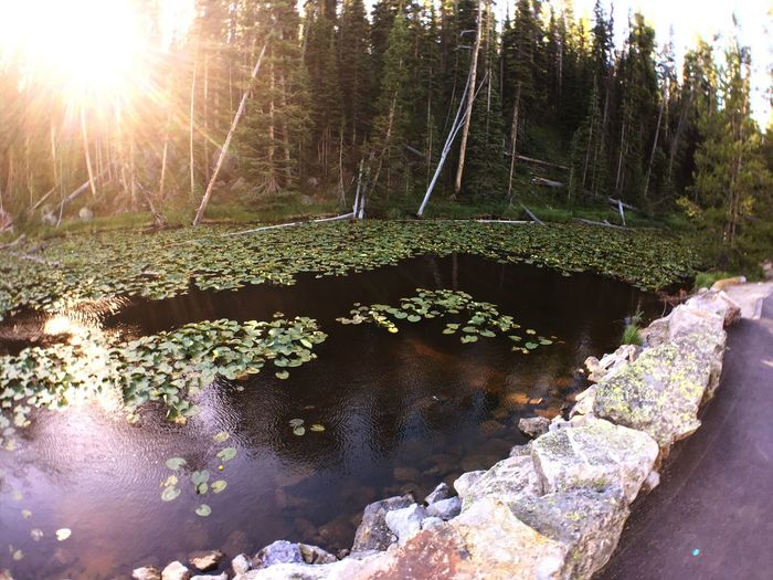 Contentinental devide Yellostone Lilipads Pond Travel Traveling