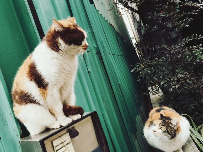Street Photography Whispering Domestic Cat Domestic Animals Feline Cat
