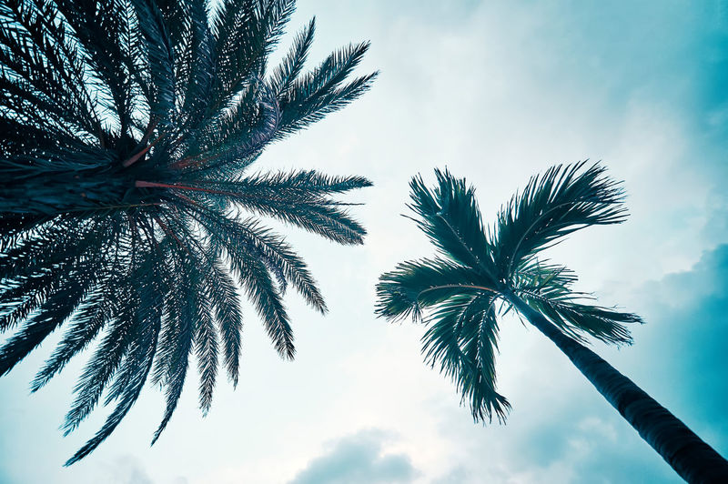 coconut palm tree Nature OKINAWA, JAPAN Okinawa Travel Beauty In Nature Cloud - Sky Coconut Palm Tree Day Growth Leaf Low Angle View Nature No People Outdoors Palm Leaf Palm Tree Silhouette Sky Tranquility Travel Destinations Tree Tree Trunk Tropical Climate Tropical Tree Trunk