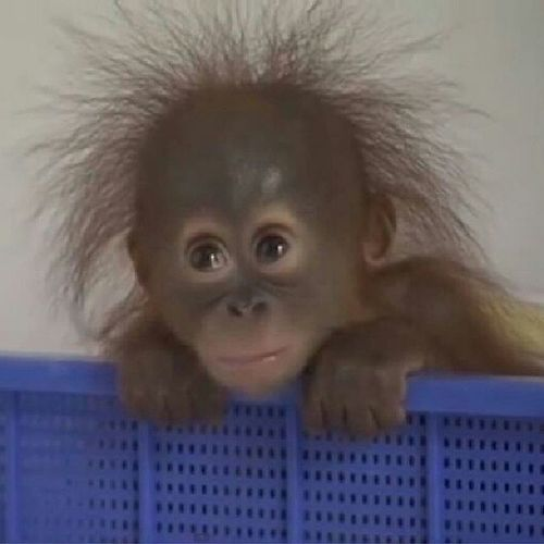 Not a good day :( Sadbaby Monkeysnuggle Bighairdontcare Monkeyluv