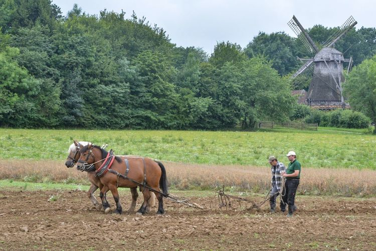 Field Domestic Animals Agriculture Tree Rural Scene Day Livestock Adult Men One Person Outdoors Full Length Real People Nature Farmer Mammal One Man Only Ploughing People Only Men