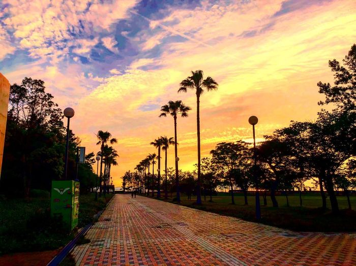 Sky Tree Plant Cloud - Sky Sunset Nature Orange Color Outdoors No People Beauty In Nature The Way Forward Sunlight Direction Street Silhouette Fence Footpath Transportation Growth Architecture
