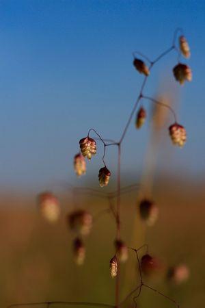 Weeds Flowers, Nature And Beauty EyeEm Nature Lover Blue Sky Weed Macro Filigran Flowers Filigran