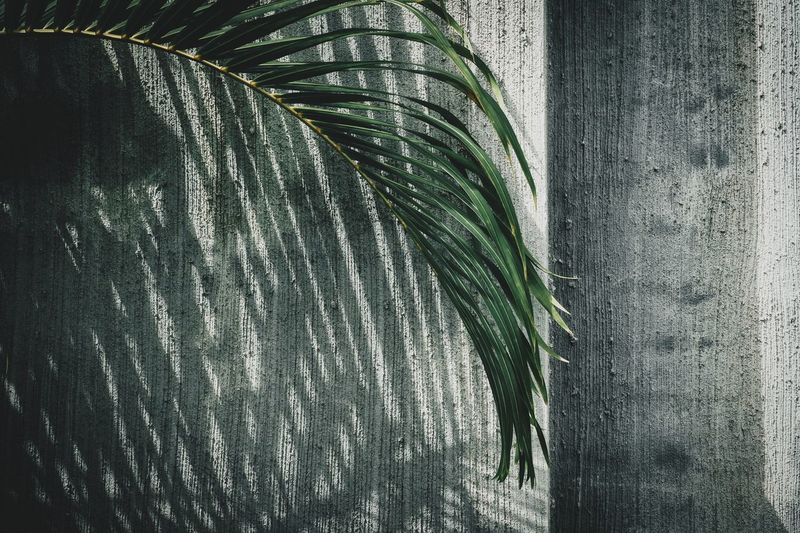 Palm leaves against concrete wall