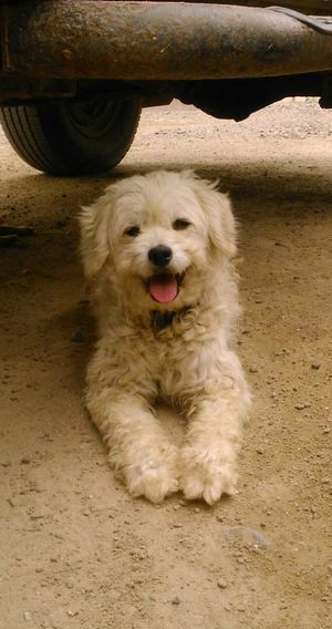 Darcy 🐕 Dogs Dog Love Pets Dogmodel ForeverhappySmiling Smile :) Smi Pet Portraits EyeEmNewHere The Week On EyeEm