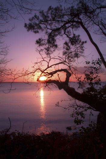Tree Sky Water Beauty In Nature Plant Scenics - Nature Sunset Tranquility Tranquil Scene Nature Lake Branch Silhouette No People Reflection Idyllic Non-urban Scene Sun Growth Outdoors