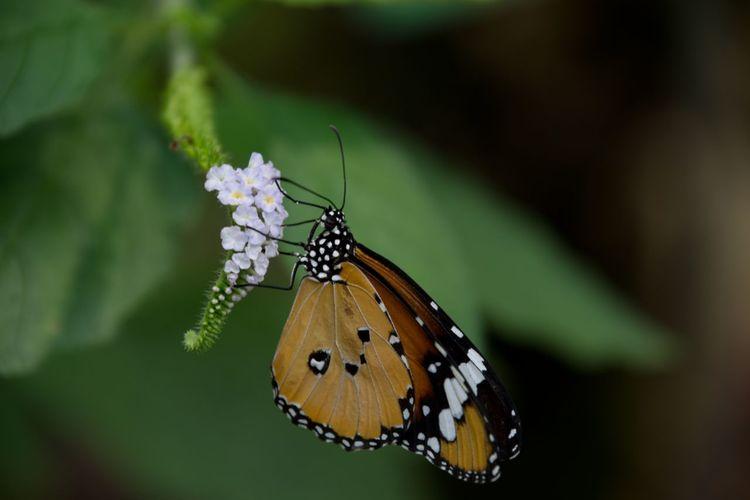 Butterfly on bloom - kleiner monarch