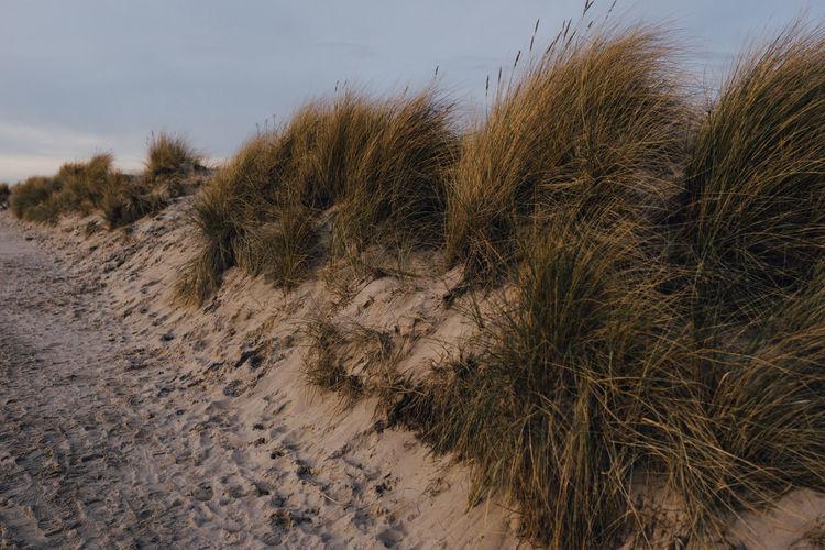 Meditation Beach Beach With Grass Beachlife Brown Grass Close Up Sand Sand Dune Seascape Seaside Yellow Grass And Sea