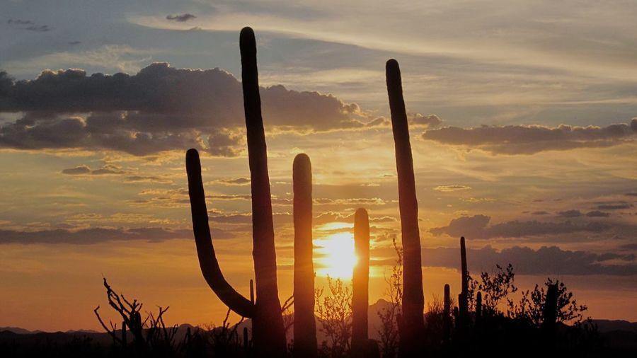 Sunset Nature Cactus Saguaro National Park Roadtrip Sky Sunset #sun #clouds #skylovers #sky #nature #beautifulinnature #naturalbeauty #photography #landscape Scenics Peaceful Warm Colors