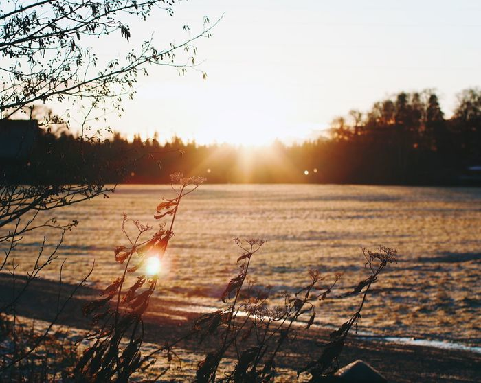 Saved by the sun ❄️☀️ Sunsets Sunset Sunset Sun Sunlight Sunbeam Lens Flare Nature Tranquility Beauty In Nature Scenics Tranquil Scene No People Sky Winter Outdoors Cold Temperature Water Tree