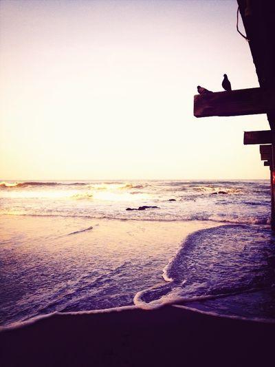 Beach Beauty Ocean Water_collection