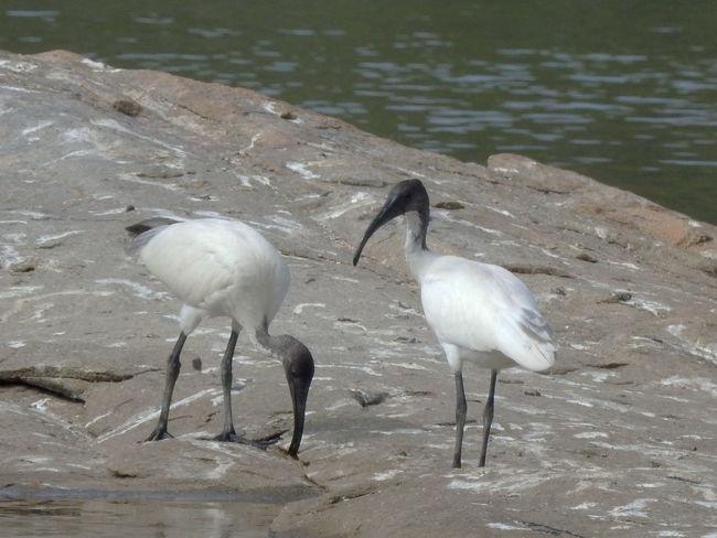 Animal Themes Animals In The Wild Arid Climate Balance Beak Bird Full Length No People One Animal White Wildlife Zoology