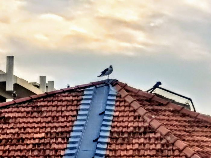 Low angle view of bird perching on roof of building against sky