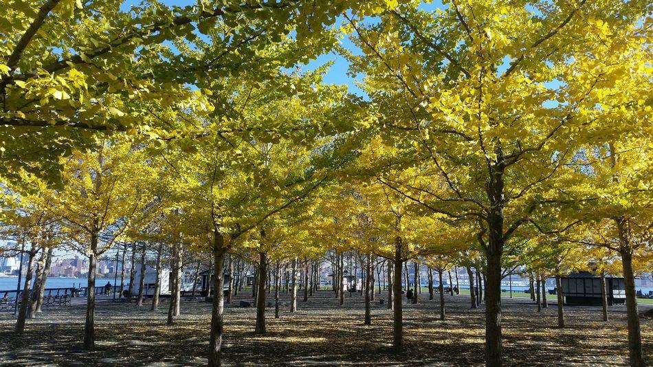 Fall Season Yellow Leaves Photography Nature