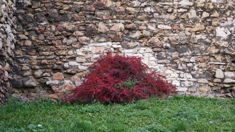 Free time in the park. Architecture Autumn Bush Będzin Castle Close-up Day Free Time Grass Horizontal No People Outdoors Park Poland Red Textured  EyeEmNewHere