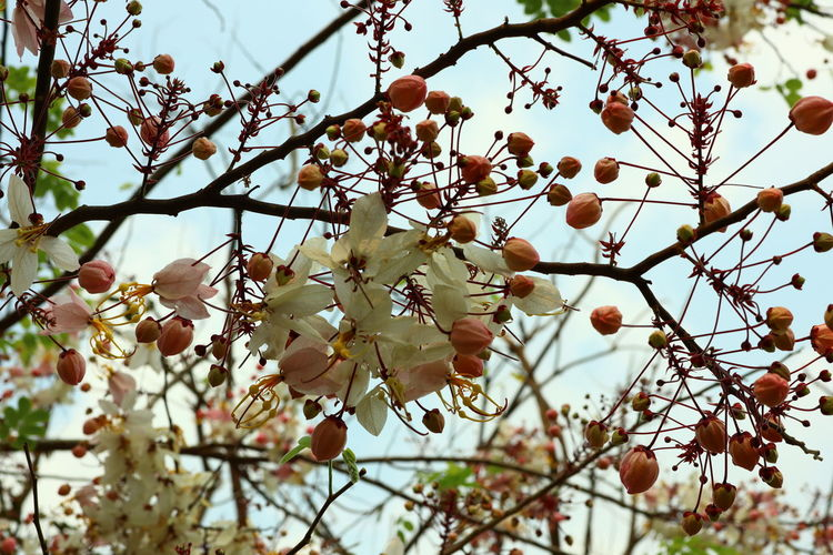 Low angle view of flower blossoms in spring