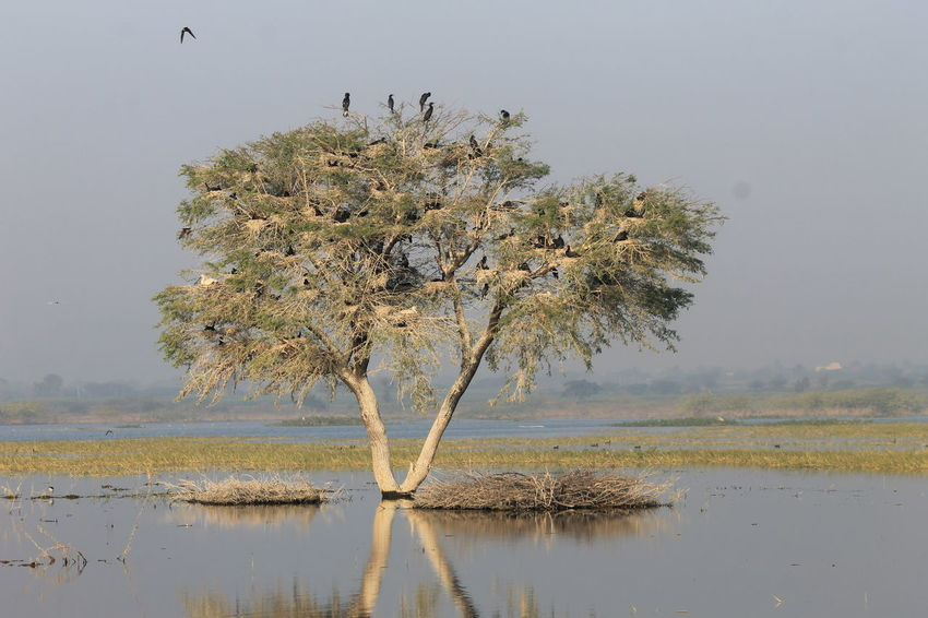 Tree, bird nest, lake, Nature Bird Beauty In Nature Rural Scene Lakefront Landscape Portraiturephotography Natural Phenomenon Finding New Frontiers Outdoors Waterfront The Way Forward