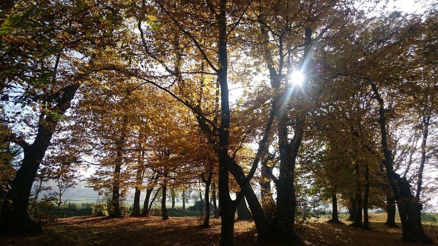 Tree Branch Tree Trunk Forest Sunlight Sky