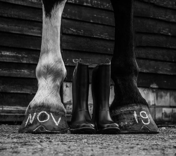 Baby opkomst! 👶🏼👶🏼 Horse Boots Boots Laarsjes Horse Feet Horse Photography  Horse Paard Baby Op Komst Low Section Body Part Shoe Standing Lifestyles